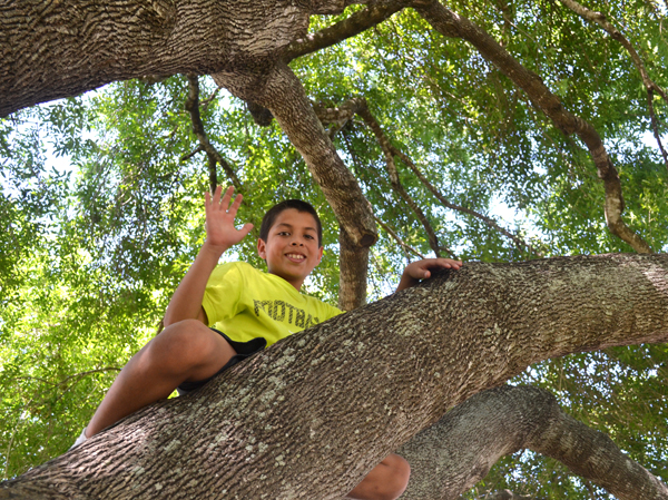 A kid playing in a tree